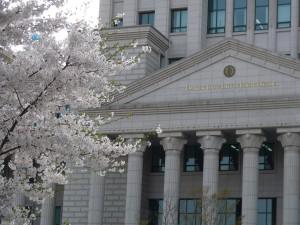 hufs-cherry-blossoms-e1366295730312