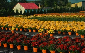 Horticulture-Corps (7)