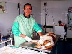 veterinary 3